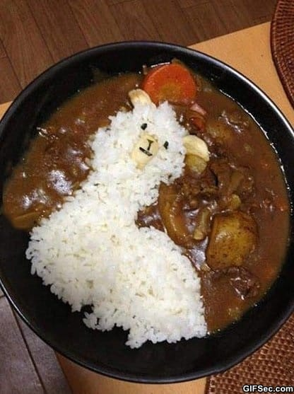 funny-pictures-llama-curry-rice