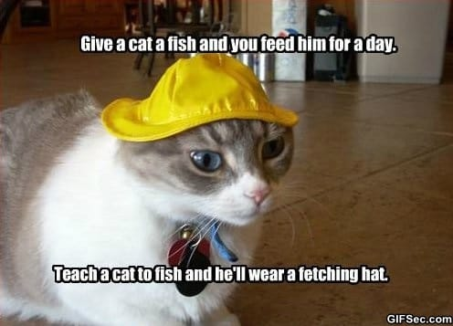 give-a-cat-a-fish