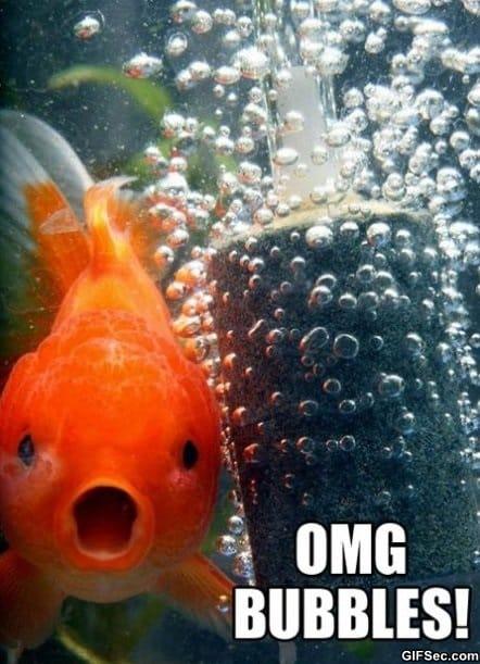 goldfish-meme
