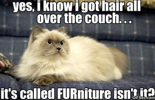 hairy-furniture
