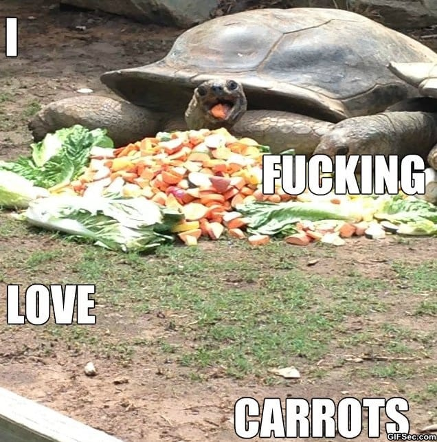 happiest-turtle-ever
