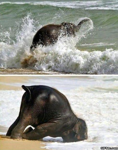 happiest-baby-elephant-ever