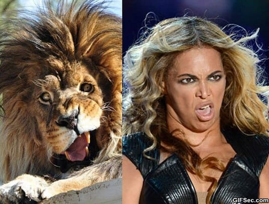 i-knew-i-had-seen-that-lion-before