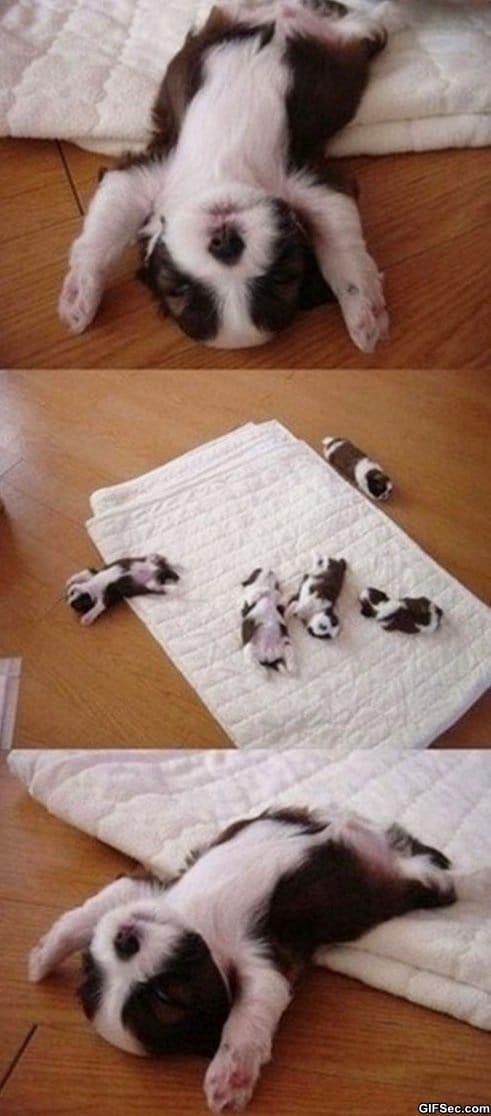 i-surrender-to-sleep