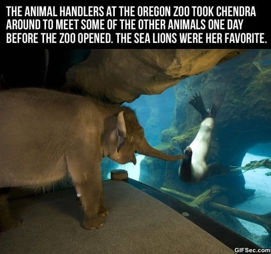 just-an-elephant-visiting-a-sea-lion