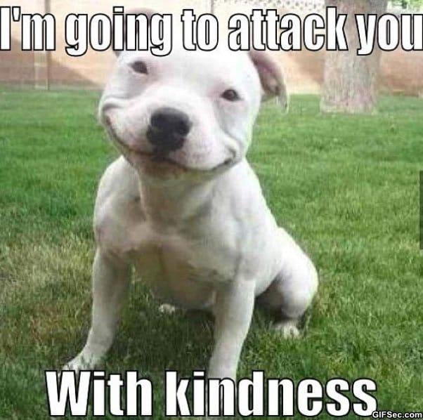 kind-dog