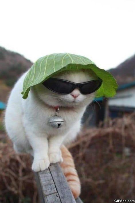 kitty-keeping-it-gangsta