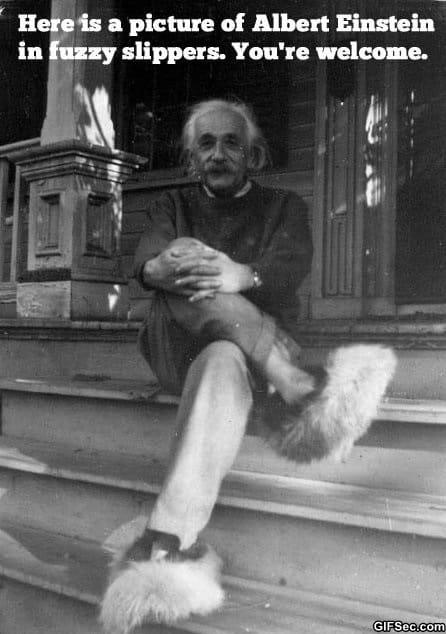 lol-albert-einstein-in-fuzzy-slippers