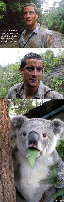 lol-bear-grylls-in-australia