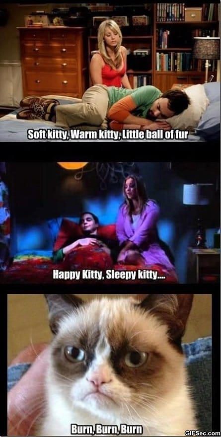 Grumpy Cat Big Bang Theory