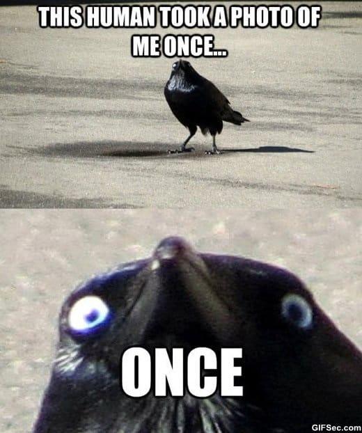 lol-insanity-crow