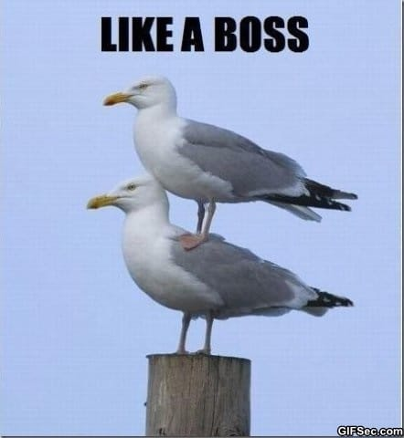 lol-like-a-boss