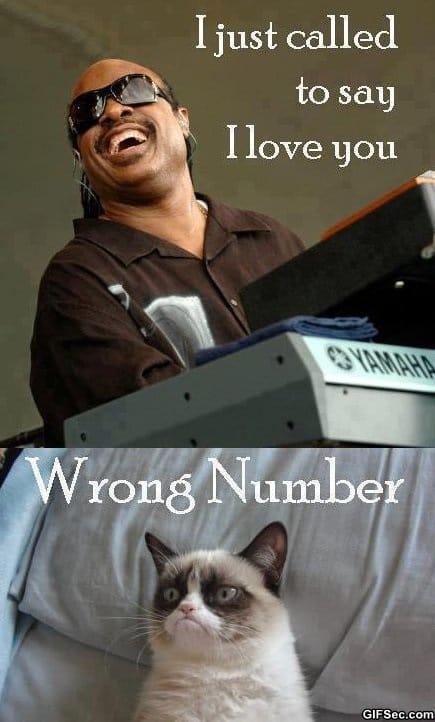 lol-stevie-calls-grumpy-cat