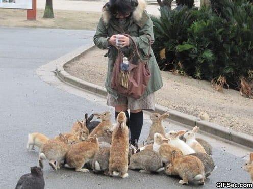 lol-the-bunny-whisperer