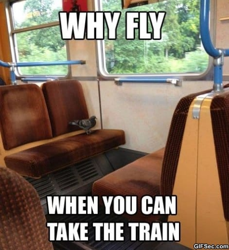 lazy-pigeon