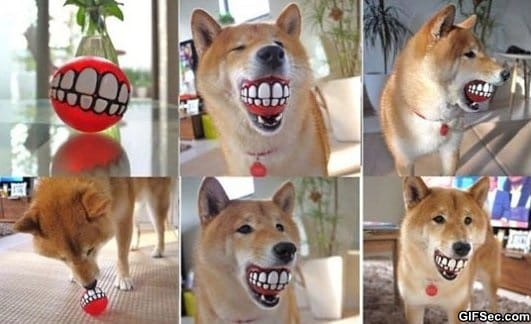 lets-put-a-smile-on-that-dog