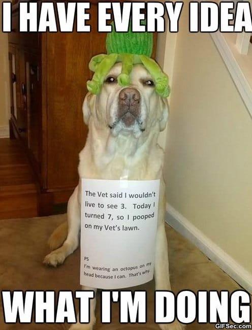 meme-awesome-dog