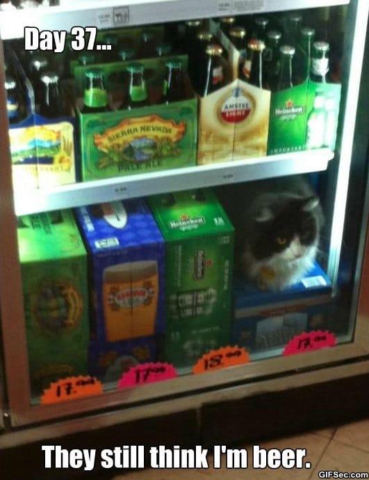 meme-beer-cat