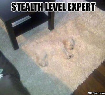 meme-camouflage-expert