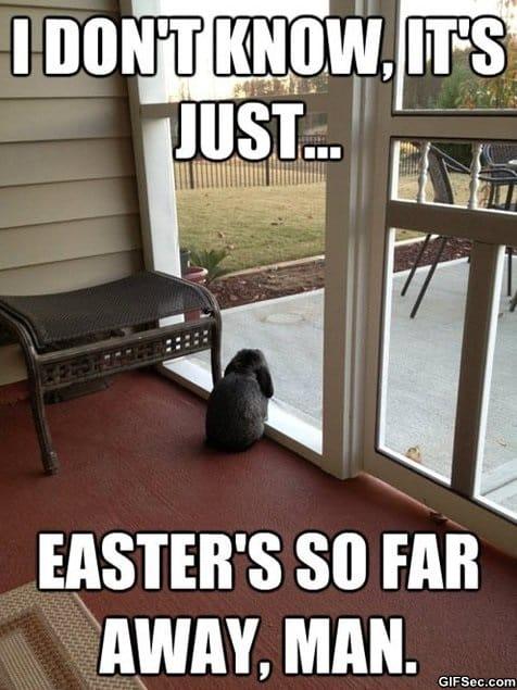 meme-contemplative-bunny
