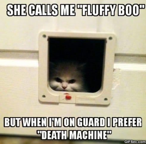 meme-fluffy