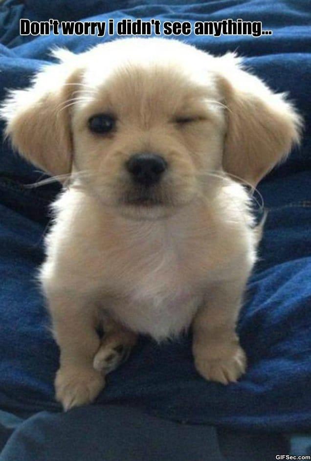 meme-friendly-dog