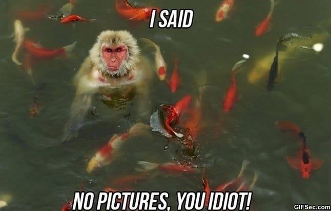 meme-no-pictures