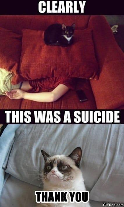 meme-plotting-cats