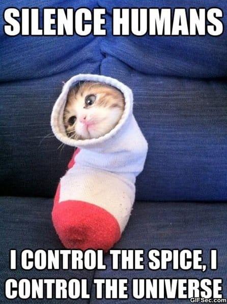 meme-sock-kitty