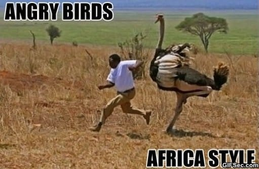 meanwhile-in-africa