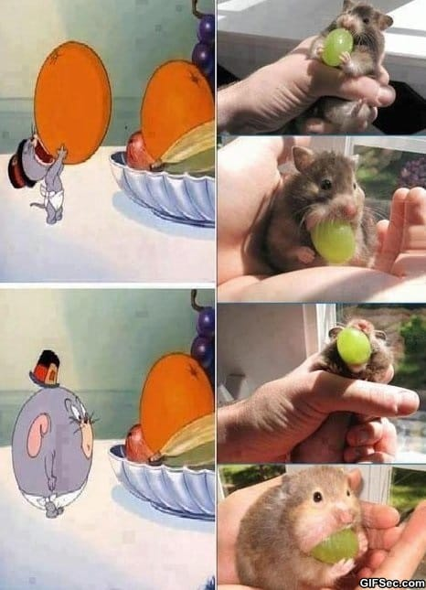 mouse-eats-a-grape