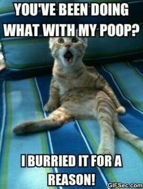 my-poop
