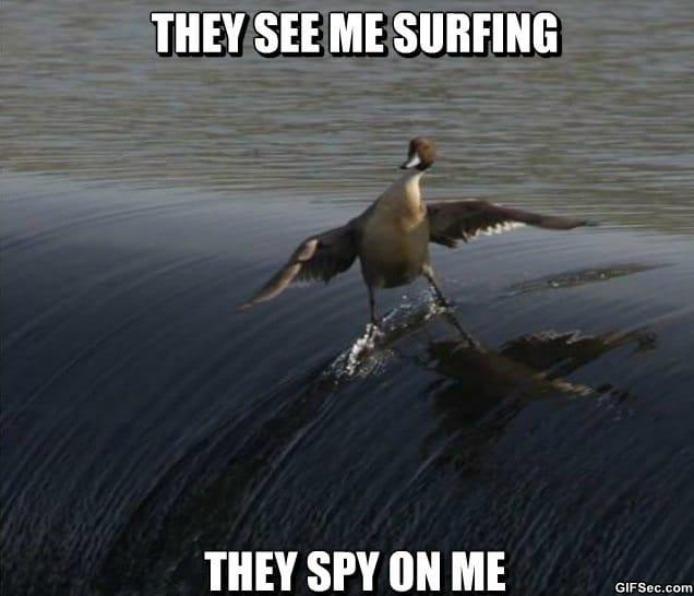 nsa-spying-lvl-ducks