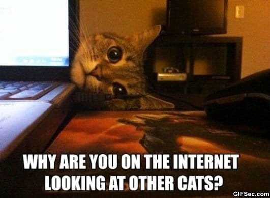 overly-attached-kitty