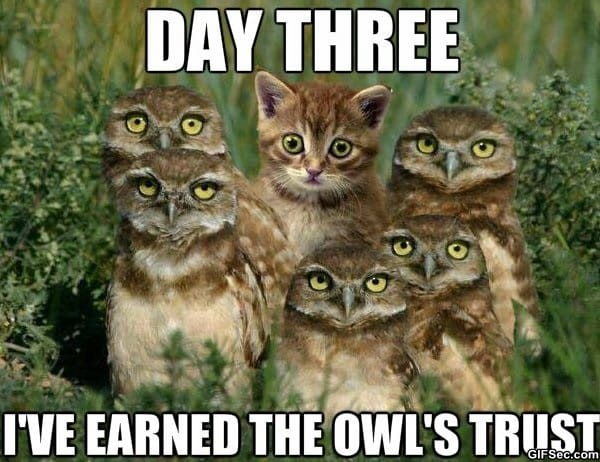 owl-try-that