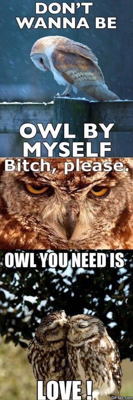 owl-by-myself