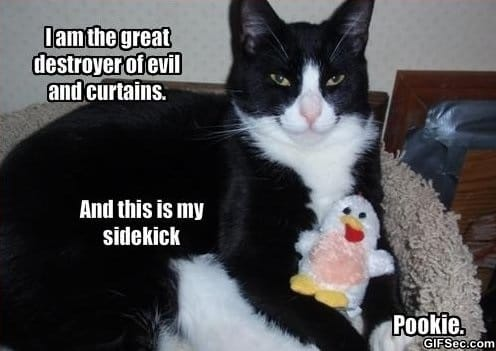 pookie-is-vicious
