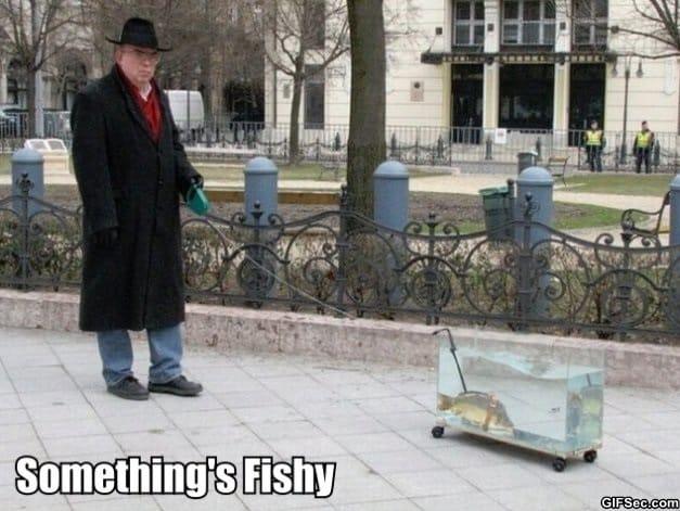 somethings-fishy