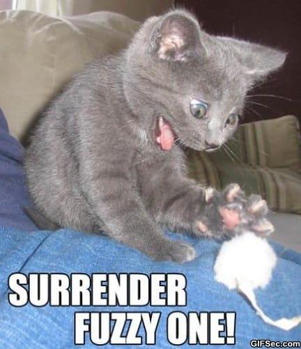 surrender-fuzzy-one