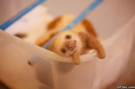 the-cutest-baby-sloth-that-ever-existed