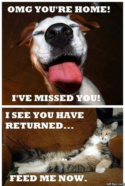 the-difference-between-dogs-and-cats
