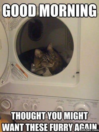 thoughtful-cat