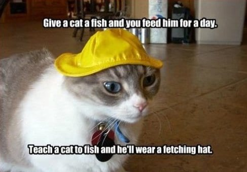 give-a-cat-a-fish-meme-lol