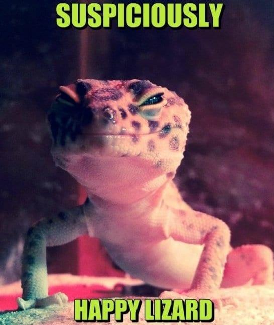 Funny MEME Pictures Lizard MEMES