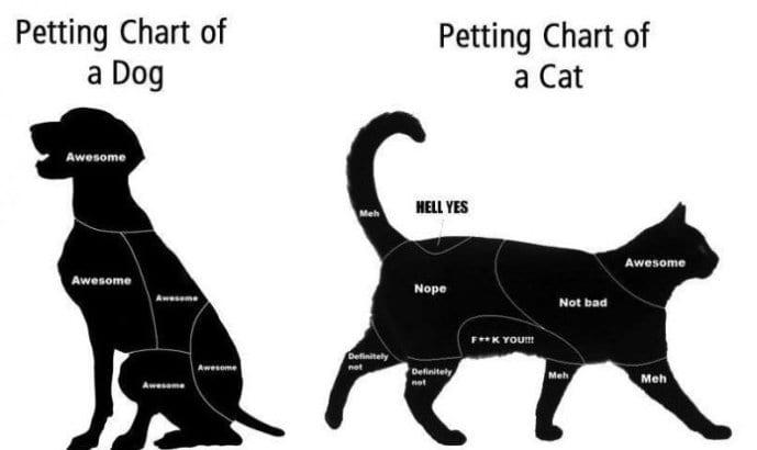 Dog Petting Cat
