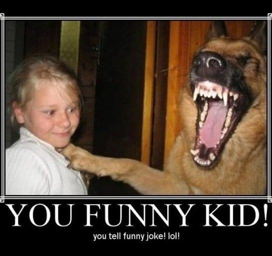 Funny Meme Pictures 2014 : Funny dog meme