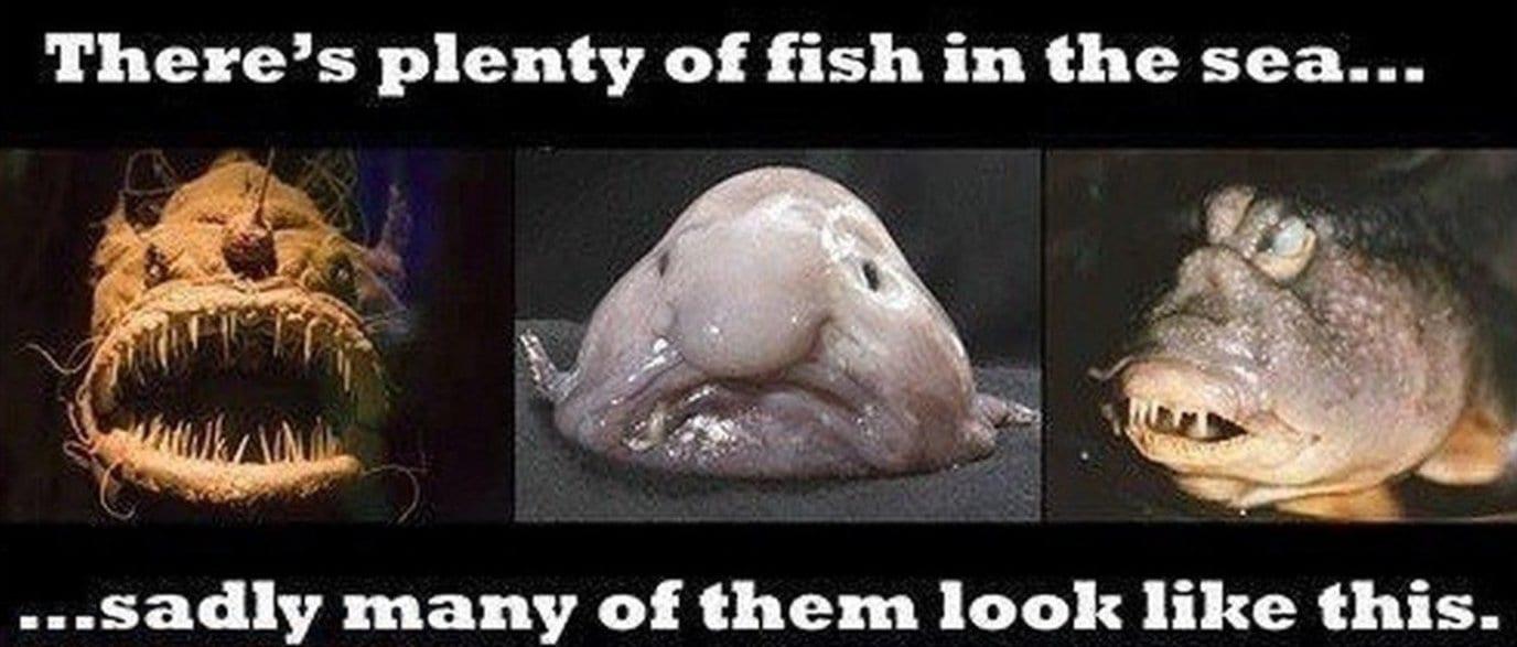 Funny looking fish memes