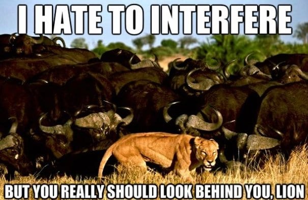 November MEME LOL 2013 Scrambled Lion november meme lol 2013 scrambled lion,Funny November Meme
