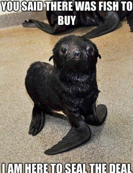 Seal Pun seal pun viral viral videos