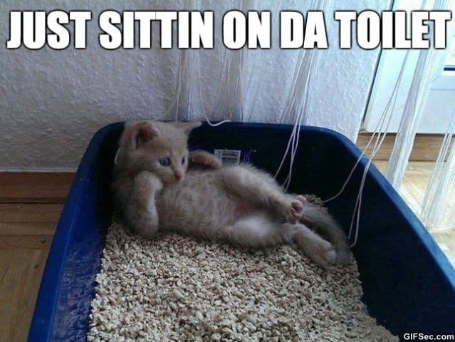 just-sittin-on-da-toilet